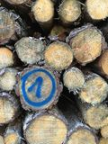 Pile of blue marked trunks of wood Royalty Free Stock Image