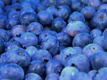 Pile of Blueberries Royalty Free Stock Images