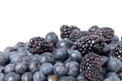 Pile of blueberries Royalty Free Stock Image