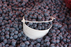 Pile of blueberry. With basket on the street market Stock Images