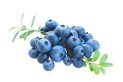 Pile of blueberry Stock Photo