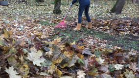 Pile of blurred leaves and woman legs in gumboots raking leaves with rake. 4K stock video