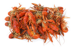 Pile of boiled crawfishes Stock Photos