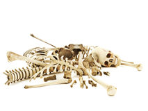 Pile of bones. Photo realistic 3d rendering on a white background stock photography