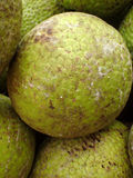 Pile of Breadfruits Stock Photo