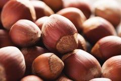 Pile of brown acorns closeup macro shot. Selective focus Royalty Free Stock Photography