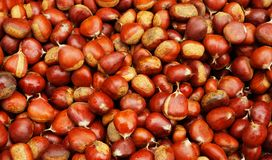 Pile of Brown Chestnuts Stock Images