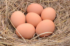 A pile of brown eggs in a nest Stock Photography