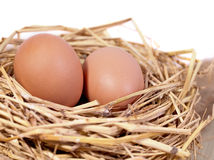 A pile of brown eggs in a nest Stock Photo
