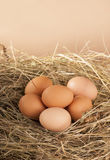 Pile of brown eggs in a nest Stock Photo
