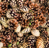Pile of   brown pine cones for backgrounds or textures. Royalty Free Stock Image