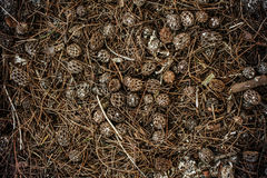 Pile of brown pine cones for backgrounds Stock Image