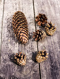 Pile of   brown pine cones on dark wood desk Stock Images