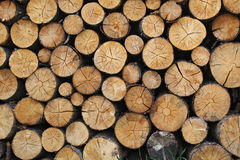 Pile of Brown Tree Logs Stock Photo