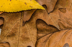 Pile brune de feuilles d'automne de chêne Photo stock