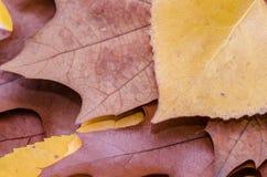 Pile brune de feuilles d'automne de chêne Image stock