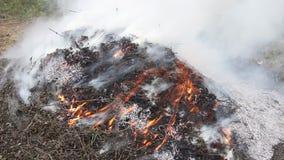 Pile of brushwood burning stock video