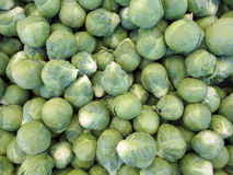 Pile of Brussel Sprouts Stock Photos