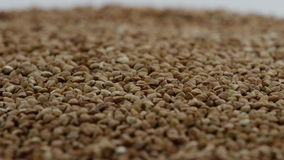 A pile of buckwheat Rotating stock footage