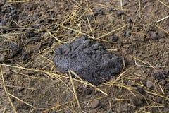 Pile of buffalo dung Stock Photos
