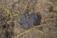 Pile of buffalo dung Stock Photography