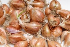 Pile of bulb onions Stock Image