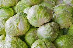 Pile of Cabbages Stock Photo