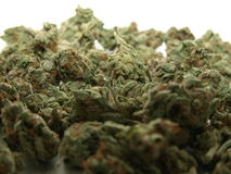 Pile of Cannabis. A pile of fresh skunk buds of Cannabis Royalty Free Stock Photography