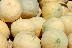 Pile of cantaloupe or muskmelons Royalty Free Stock Images