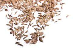 Pile of Caraway Seeds Royalty Free Stock Photos