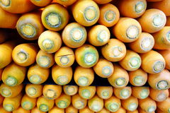Pile of Carrots Stock Images