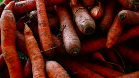A pile of carrots  (Daucus carota) on the ground. Carrots crop. stock video footage