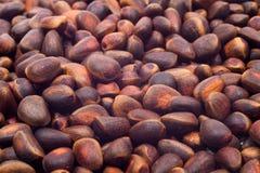 A pile of cedar nut Stock Photo