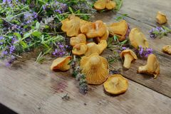 Pile of chanterelle mushrooms isolated on the white background. Edible mushrooms Royalty Free Stock Photo
