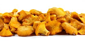 Pile of chanterelle mushrooms isolated on the white background. Edible mushrooms Royalty Free Stock Image