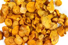 Pile of chanterelle mushrooms isolated on the white background. Edible mushrooms Stock Images