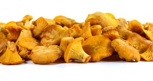 Pile of chanterelle mushrooms isolated on the white background. Edible mushrooms Stock Photo
