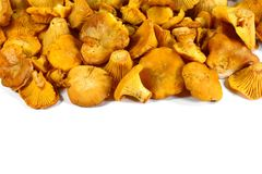 Pile of chanterelle mushrooms isolated on the white background. Edible mushrooms Stock Photography