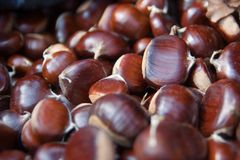 Pile of chestnut Royalty Free Stock Photo