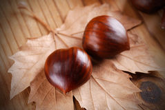 Pile of chestnuts Royalty Free Stock Images