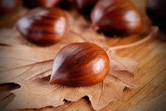 Pile of chestnuts Royalty Free Stock Photos