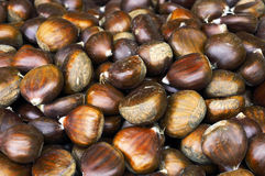 Pile of chestnuts Stock Images