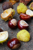 Pile of chestnuts. Brown chestnuts in the autumn Stock Image