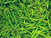 Pile of chilies. Full frame of chilies at market royalty free stock image