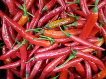 Pile of chilies. Full frame of chilies at market stock image