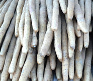 pile of Chinese yam royalty free stock photos