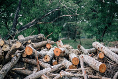 A pile of chopped down royalty free stock photo