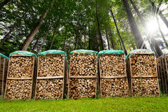 Pile of Chopped Firewood in the Woods Stock Images