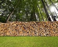 Pile of Chopped Firewood in the Woods Stock Photo