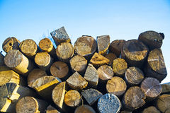 Pile of chopped logs Royalty Free Stock Images